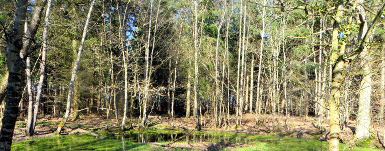 dans la forêt…